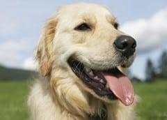 assocation veterinaire gratuit